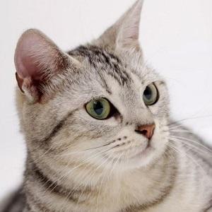 rare-고양이
